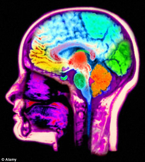 brain connections.jpg